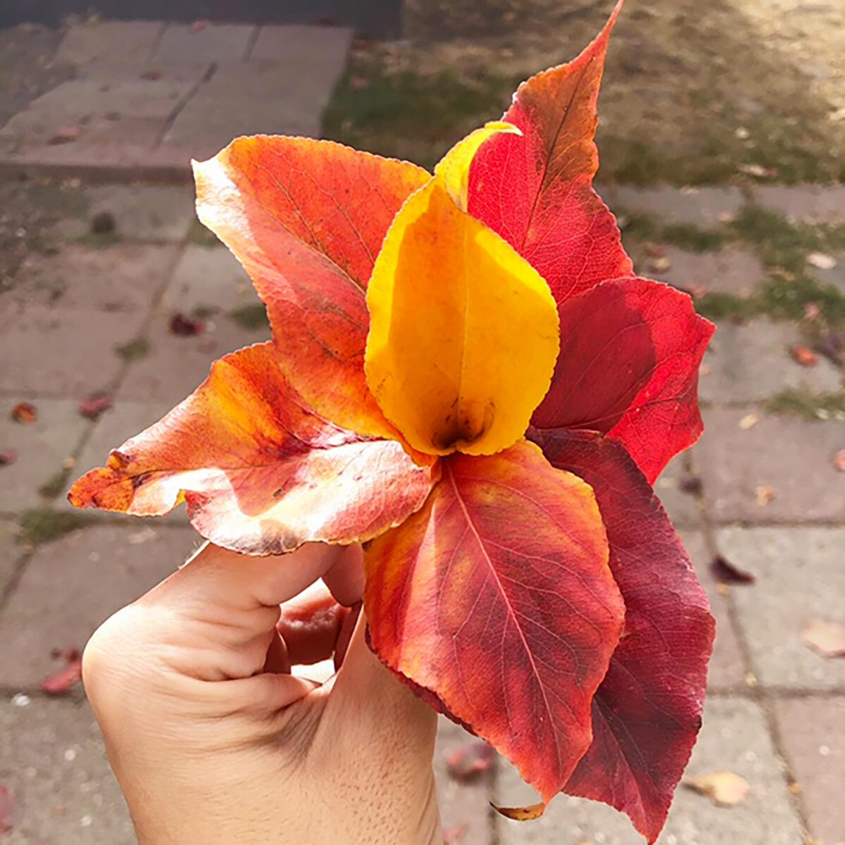 A hand holds a small bouquet of fall leaves.