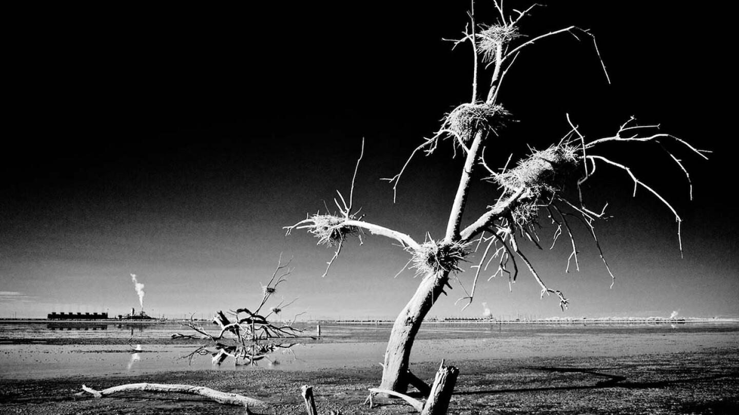 Dead Tree Nests & Thermal Plants - Infrared Exposure - Salton Sea, CA - 2014  | Osceola Refetoff