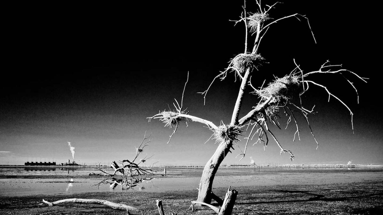 Dead Tree Nests & Thermal Plants - Infrared Exposure - Salton Sea, CA - 2014  | Osceola Refetoff