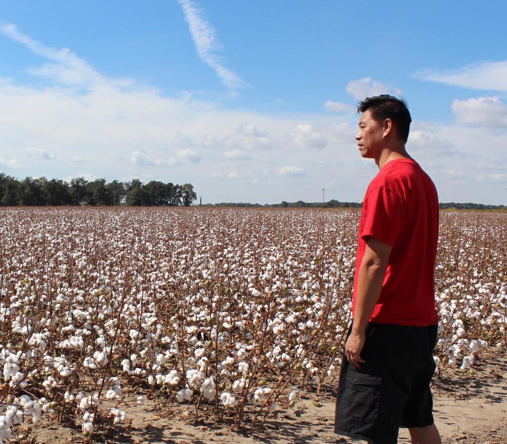 Baldwin Chiu surveys the cotton fields in Mississippi.