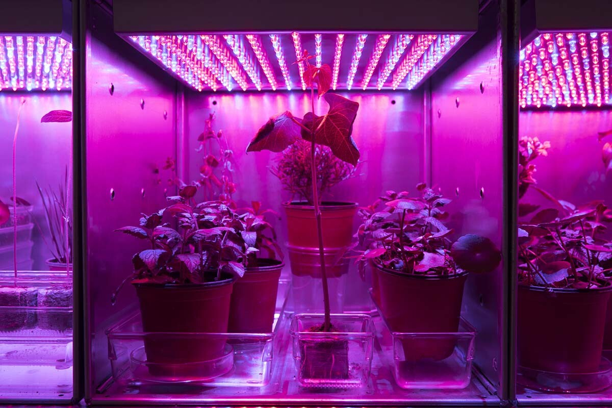 """""""Astroculture,"""" Galvanized steel cubes, LED lights, live plants grown in the Museum, 2018 by Suzanne Anker 