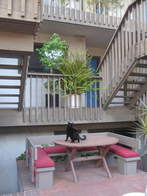 cat_on_table_in_courtyard_of_apartment_building2.jpg