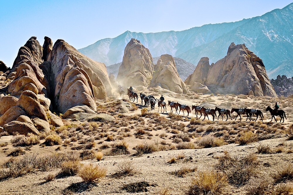 100 mules in the Alabama Hills | Photo: Osceola Refetoff.