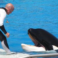 ban-orca-shows-3-11-14-thumb-600x364-70318
