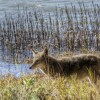groups-sue-mendocino-wildlife-services-10-25-14-thumb-630x420-84451