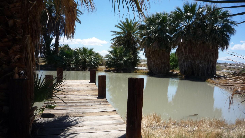 Palm trees at Dos Palmas Preserve