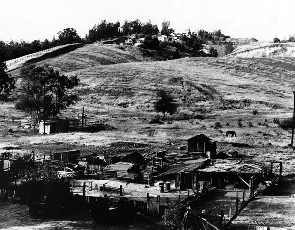Animals graze in fields outside Chavez Ravine homes in this undated photo. Courtesy of the Photo Collection, Los Angeles Public Library.