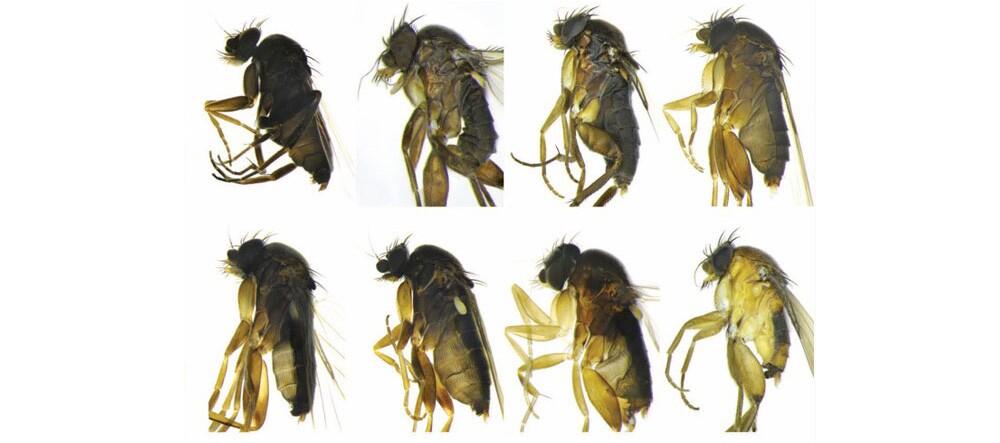 30-new-species-3-24-16.jpg