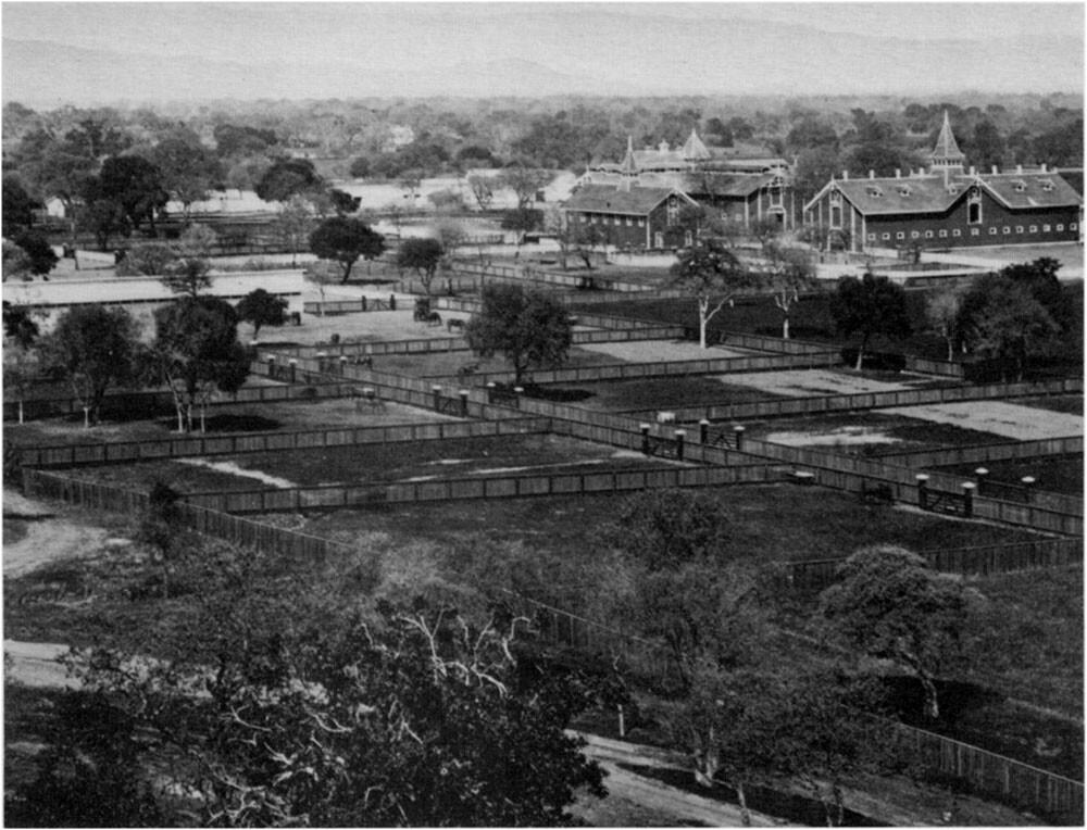 The Palo Alto acreage of Leland Stanford's stock farm, c. 1880.