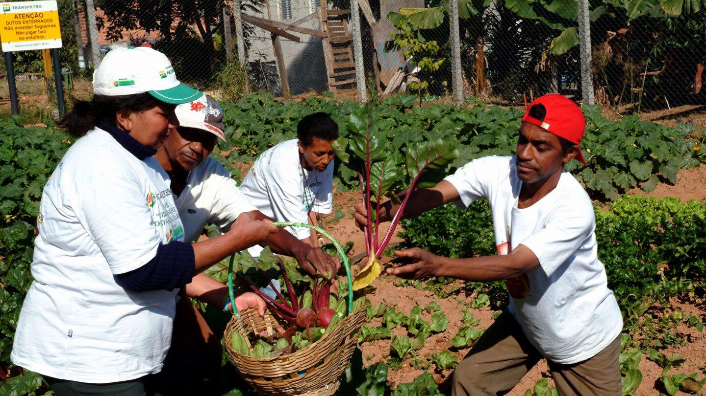 Towards the Human City: Cidades Sem Fome
