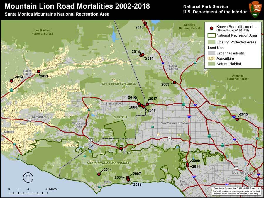 As of January 2018, the National Park Service had documented a total of 18 mountain lions struck and killed by vehicles since 2002. | National Park Service/Flickr
