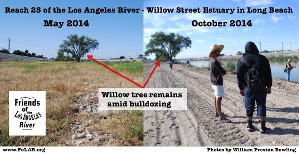 Before and after clearing of L.A. River at Reach 25, by the Willow Street Estuary | Photos by William Preston Bowling