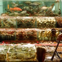 Fish Market (China)