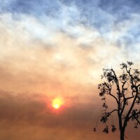 Tree and Smoky Sky, Obscured Sun