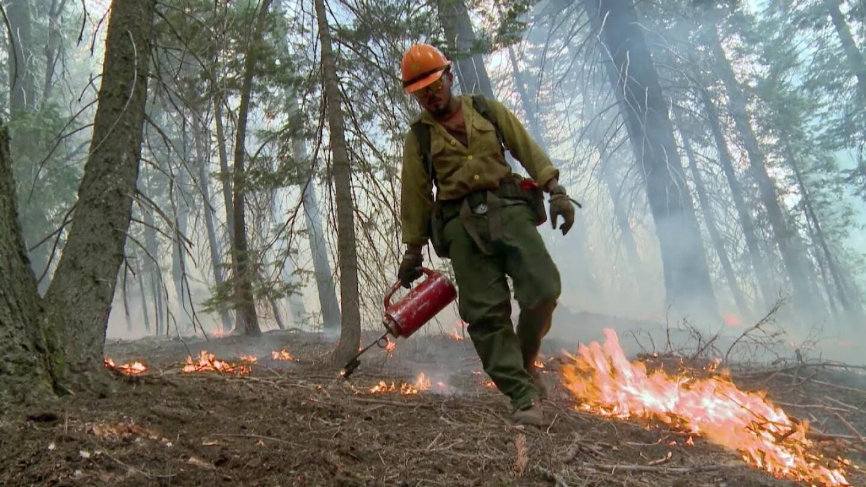 Firefighter sprays fire retardant on the forest floor.