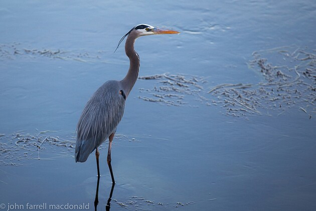 batiquitos-lagoon-ecological-reserve-thumb-630x420-92384
