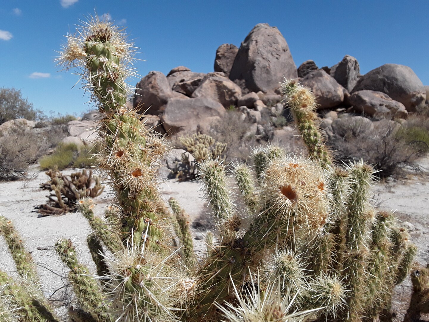 A close-up photo of cactuses at the Kumeyaay Village Site.