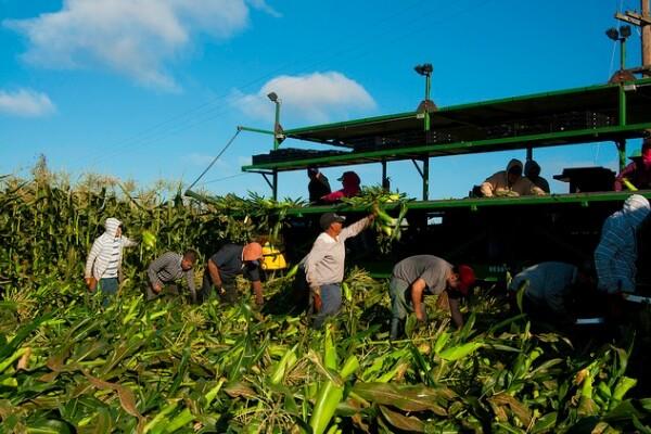 farmworkers2