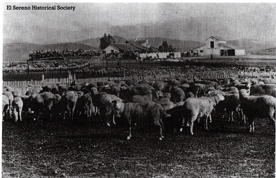 flock_of_sheep_with_houses_in_background_los_angeles_county_about_1880.jpg