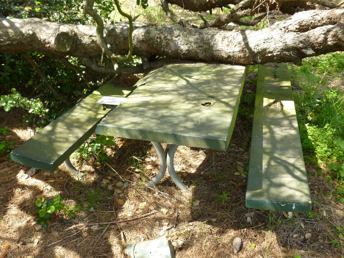 Haunted Picnic Table, Griffith Park