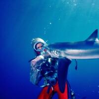 Promo images for Earth Focus Environmental Film Festival films
