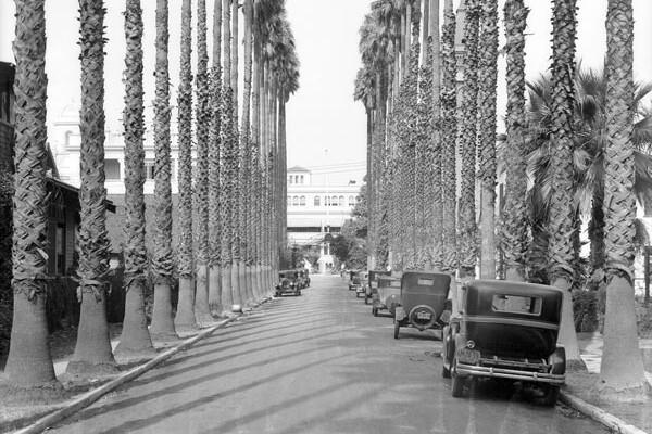 palm-trees_600