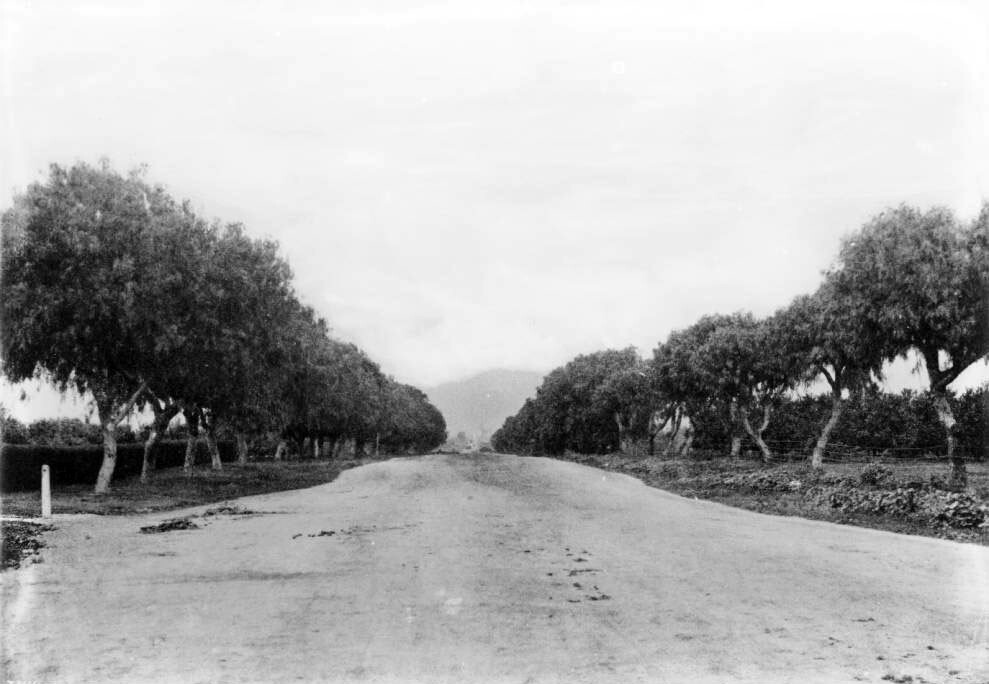 Sunset Boulevard at Normandie, ca. 1900. Courtesy of the USC Libraries - California Historical Society Collection.