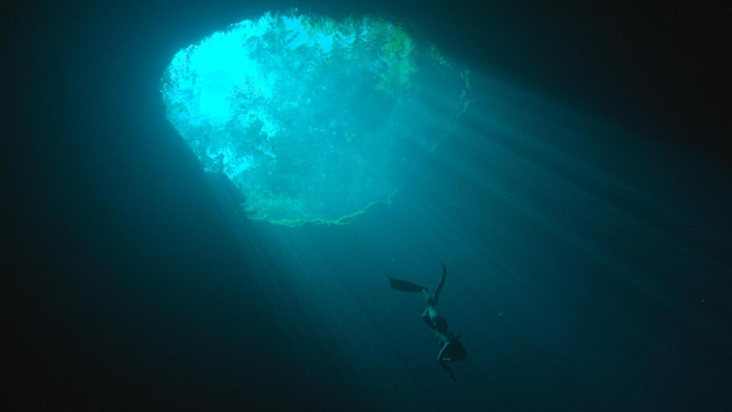 "An underwater shot of a diver making their way down from the surface. | ""H20: The Molecule That Made Us"""