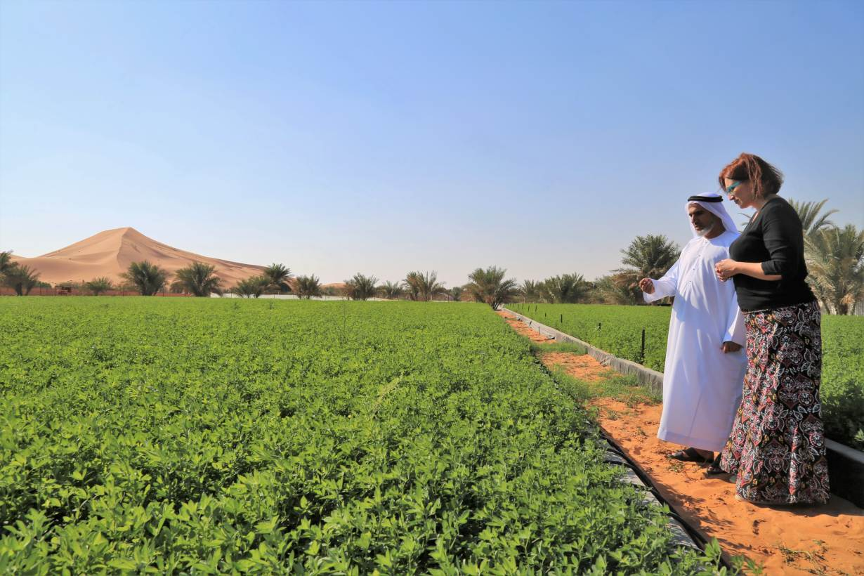 An ICBA scientist helps a farm-owner in the Al Wagan area near Al-Ain, UAE, December 6, 2018. | HANDOUT/International Center for Biosaline Agriculture (ICBA)