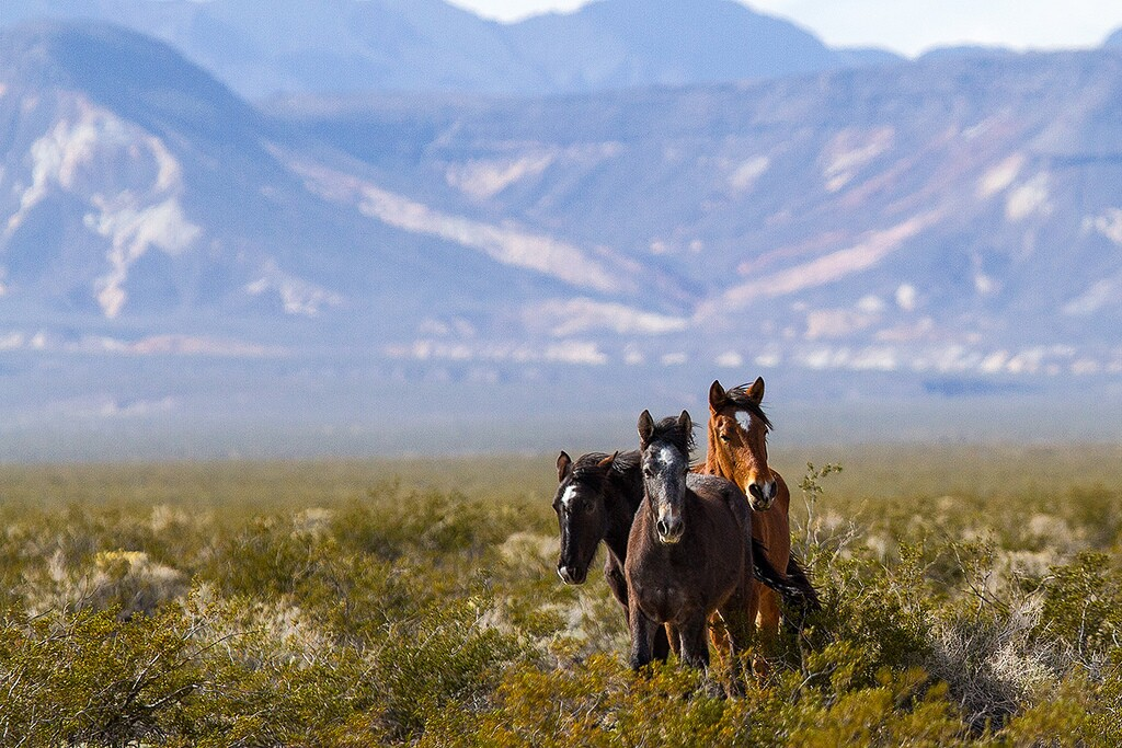 natives-horses-8-8-16.jpg