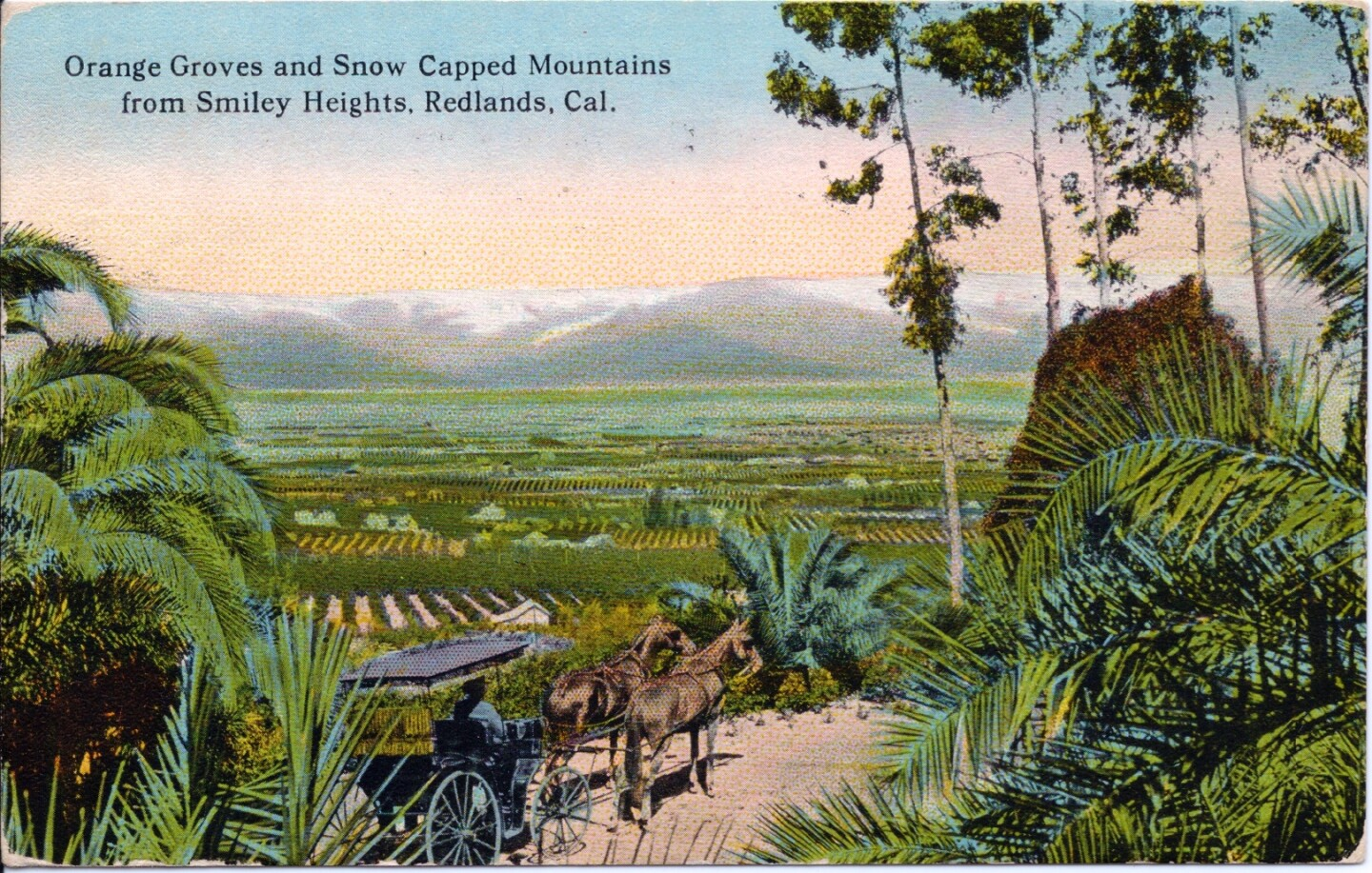Orange Groves and Snow Capped Mountains from Smiley Heights, Redlands