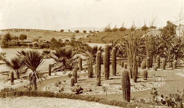 A cactus garden in Westlake Park. Courtesy of the California Historical Society Collection, USC Libraries.