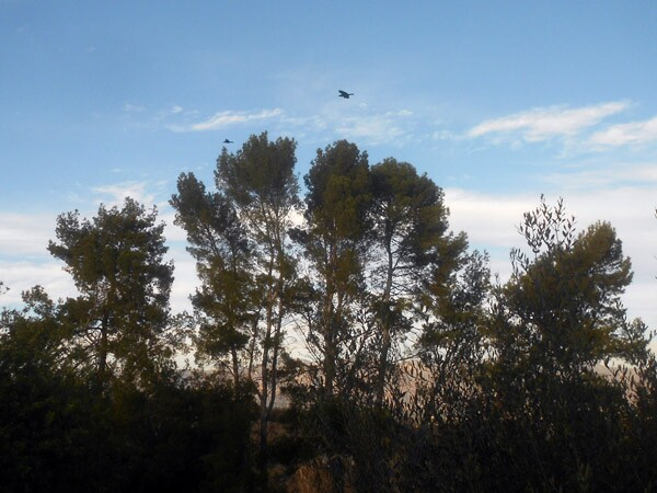 As the crow flies -- at Ernest E. Debs Regional Park.