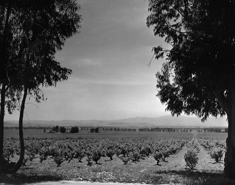 cucamonga vineyard