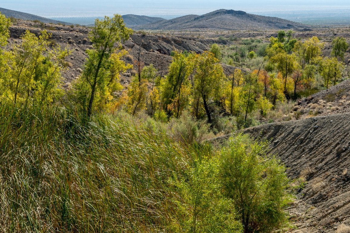 What's at stake: Bonanza Springs in the nearby Clipper Mountains may dry up if Cadiz Inc.'s water mining project gets the green light. | Kim Stringfellow