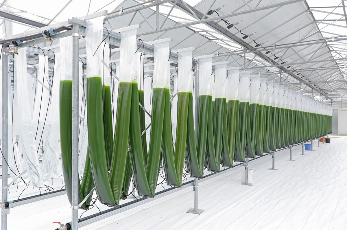 Nonfood's algae greenhouse. | Courtesy of Current: L.A. Food