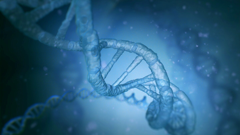 A DNA strand.