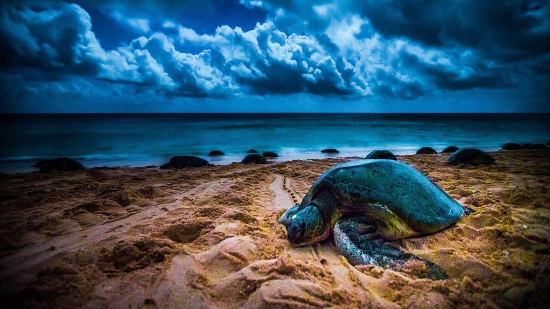 Sea turtle on the beach.