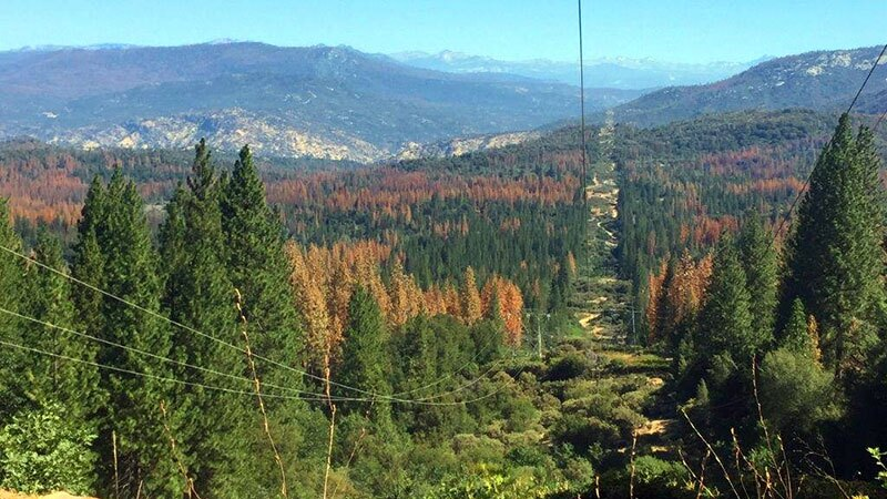 Dead trees along a transmission line corridor in the Sierra National Forest | Photo: U.S. Forest Service