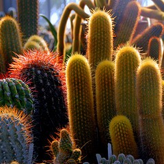 cactus-safety-spines-how-to