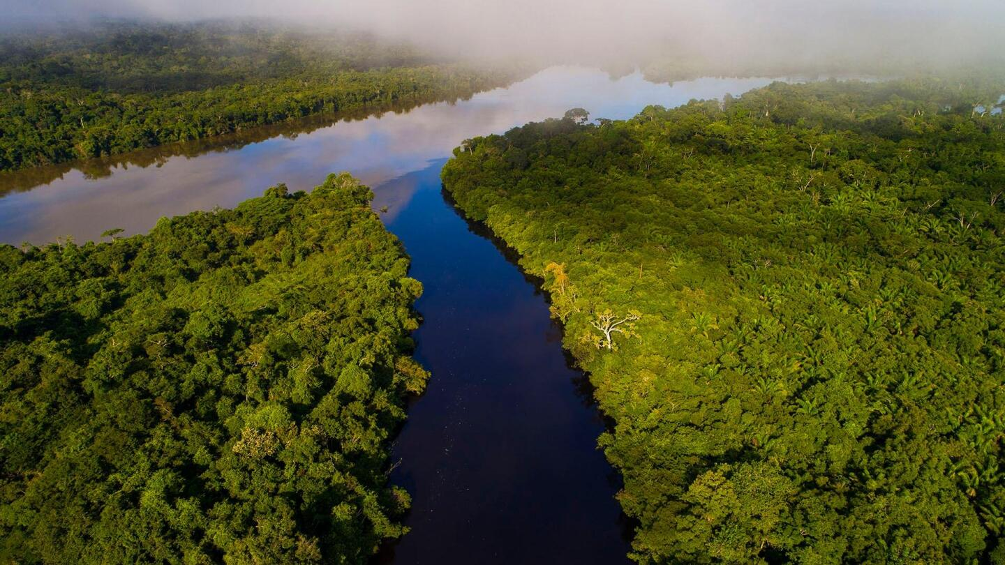 "Bird's eye view of the Amazon River. | From ""Amazon: Rivers of Life"""