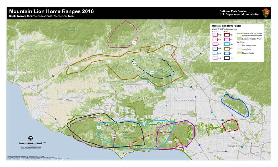 Mountain lions are solitary animals. This map shows how they share (and do not share) the landscape, including P-41's home range in the Verdugo Hills and P-22's small range in Griffith Park. | National Park Services/Flickr