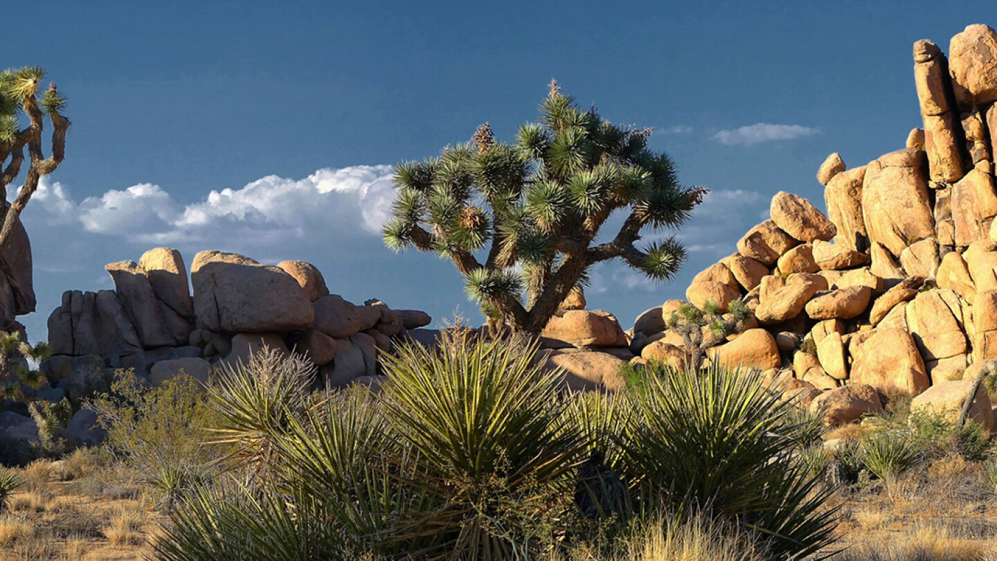 Joshua Tree National Park | Photo: Alan Eng, some rights reserved