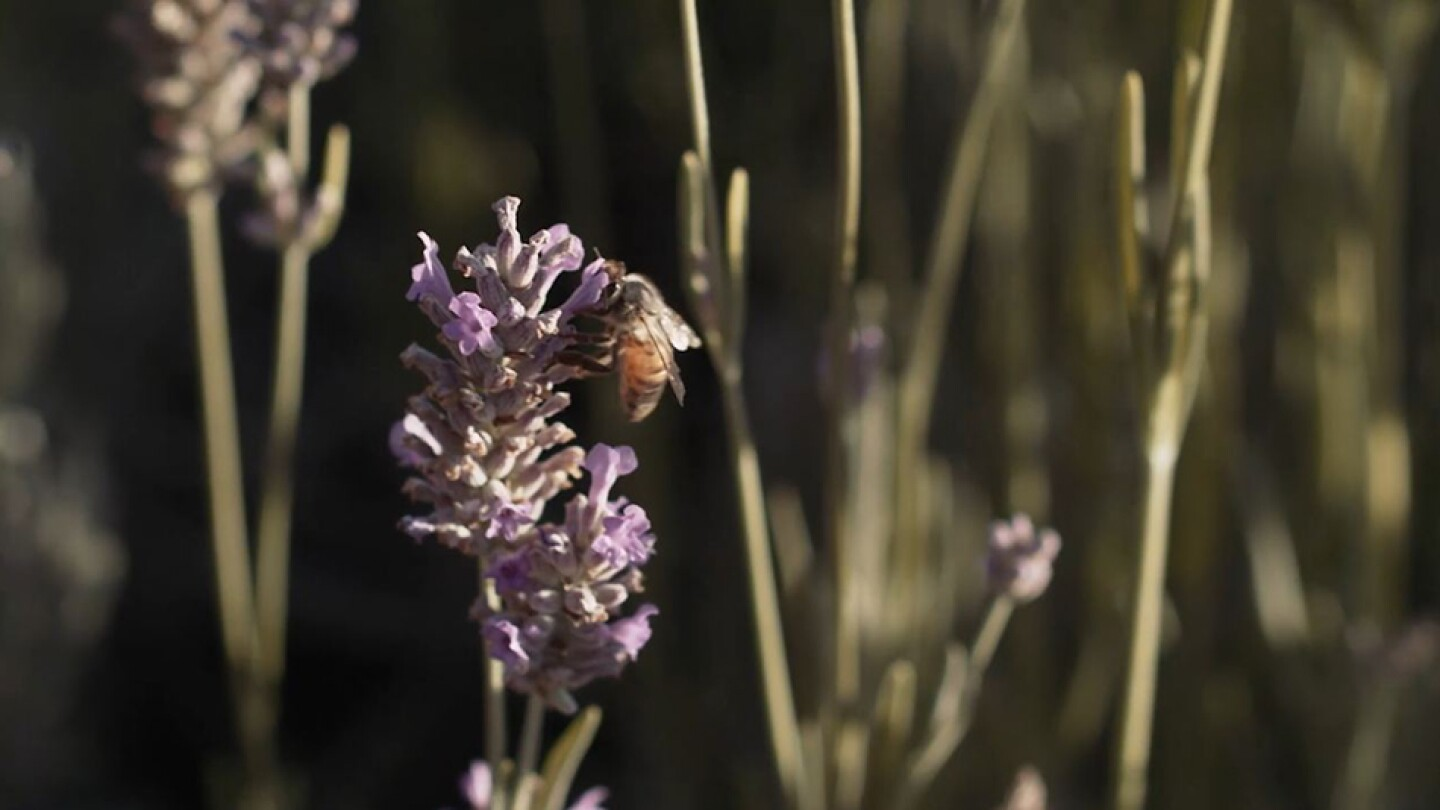 What's the Buzz about Wild Bees?