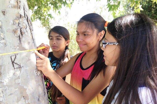 Durfee School students measuring trees