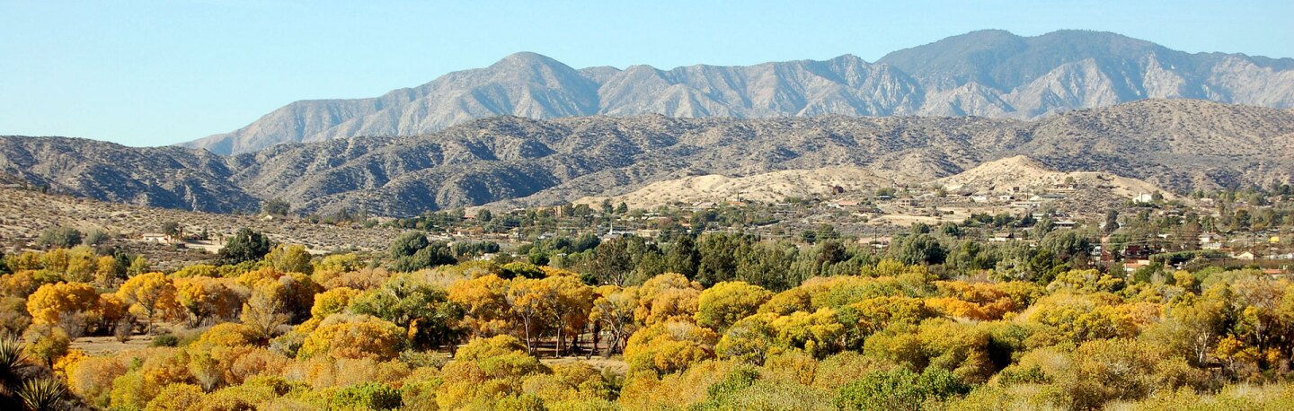 Cottonwoods in fall color at Big Morongo Canyon Preserve | Photo: Matt Artz, some rights reserved