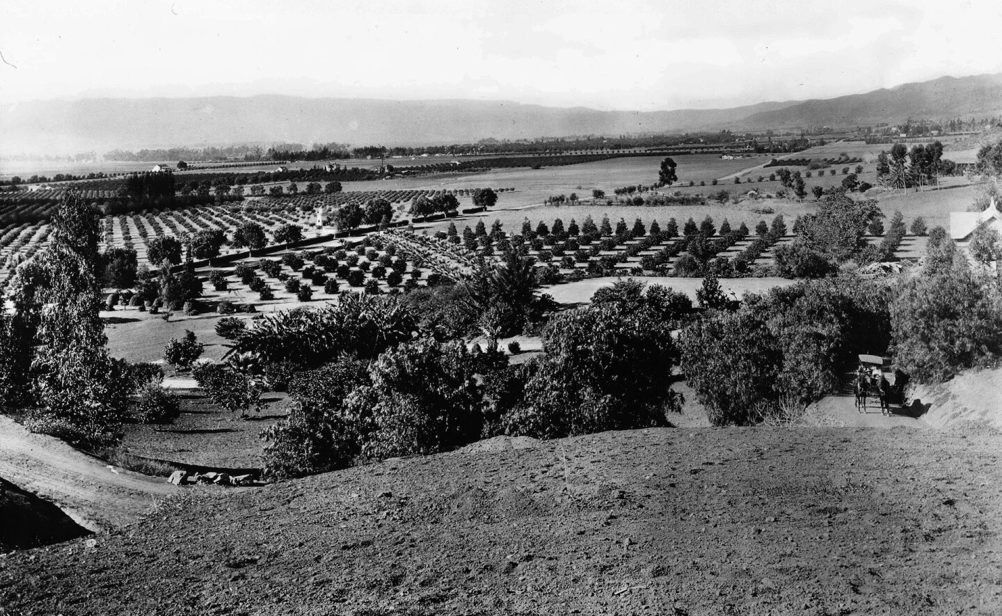 Panoramic view of Hollywood, looking west from Laughlin Park in 1903. Filmmaker Cecil B. De Mille would later build his estate atop Laughlin Park's hill.
