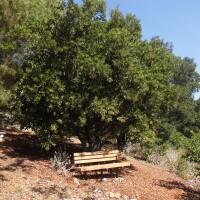 The Conejo Valley Botanic Garden nature trail | Sandi Hemmerlein