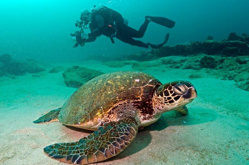 Sea Turtle and diver off Cabo Pulmo Photo: Octavio Aburto, some rights reserved