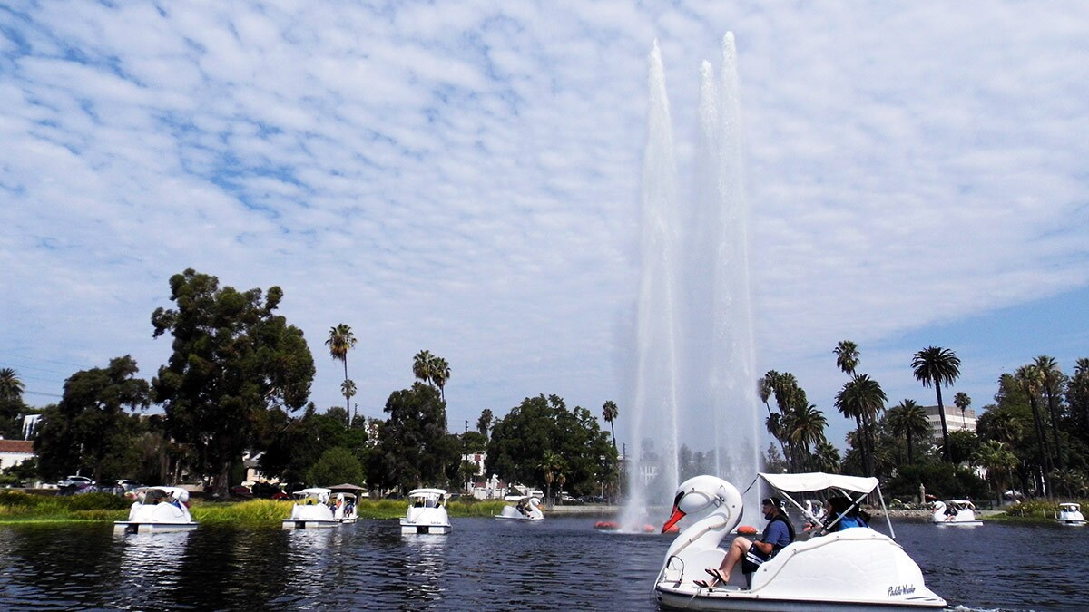 A swan pedal boat at Echo Park Lake   Sandi Hemmerlein